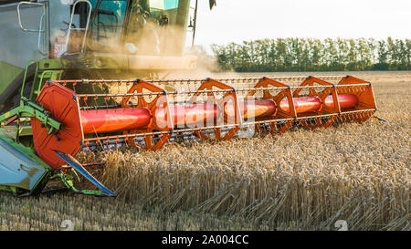 Against the backdrop of a sunny summer day and blue sky with clouds. Combine harvester harvesting ripe golden wheat on the field. The image of the - Stock Photo