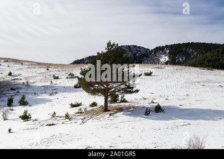 Landscape after snowing full of sun at the pirenair mountains in aragon - Stock Photo