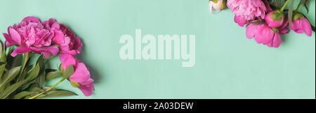Banner with pink peonies on the mint color background, - Stock Photo