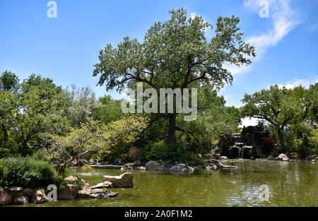 New Mexico Sasebo Japanese Garden in Summer during the Cottonwood Snows of June where the white Cottonwood Tree pollen falls like snow. - Stock Photo