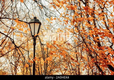 Autumn park landscape - orange colorful autumn trees and metal lantern on the background of yellowed autumn leaves in the park - Stock Photo