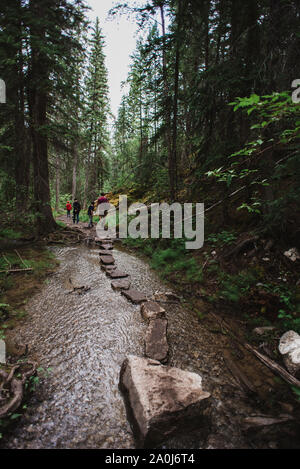 Family hiking past stepping stones on a wet trail through the forest. - Stock Photo