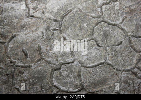Trace Fossil - Stock Photo