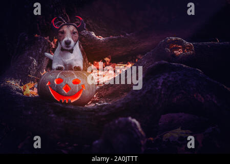 Mischief dog wearing devil's costume and blazing Jack-o'-lanterns pumpkin in mystery place - Stock Photo