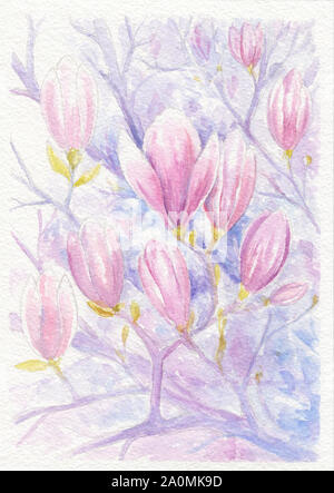 Flowering branches and flowers of magnolia, watercolor drawing - Stock Photo