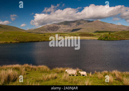 Snowdon mountain rises from the shores of Llyn y Dywarchen, a small lake ar Rhyd-Ddu in Snowdonia National Park, North Wales.