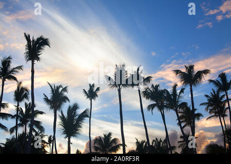 Palms, silhouettes of trees on sunset, the sun down, colorful bright blue sky with clouds background - Stock Photo