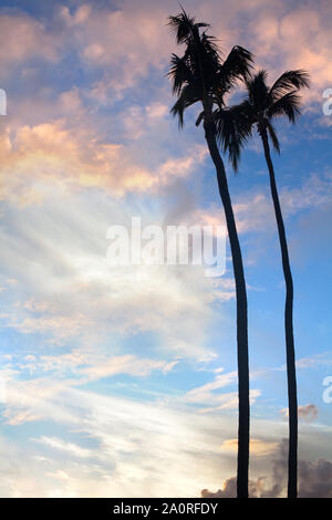 Palms, silhouettes of two trees on sunset, the sun down and colorful bright blue sky with clouds background - Stock Photo