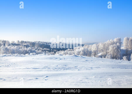 Winter snow forest and field landscape, white trees covered with hoar frost, hills, snow drifts on bright blue sky background, copy space - Stock Photo