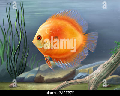 Discus fish, Symphysodon aequifasciatus, swimming in an underwater environment with stones and plants. Digital painting. - Stock Photo