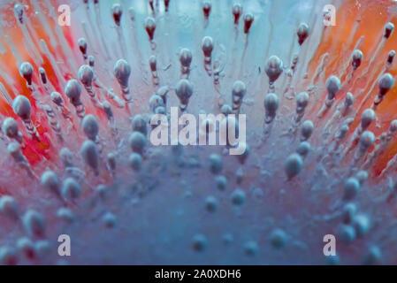 Frozen Air Bubbles Suspended in Front of Frozen Flower Back lit