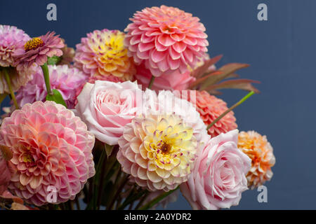 Floral composition of dahlia flowers, roses and autumn leaves. Arty, bright red and pink color  bouquet of flowers on blue background - Stock Photo