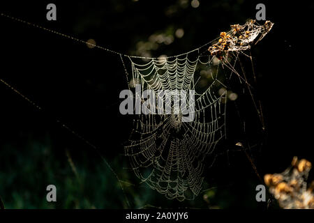 A large spider's web covered in dew drops taken on a misty autumn morning in Yorkshire, England. - Stock Photo