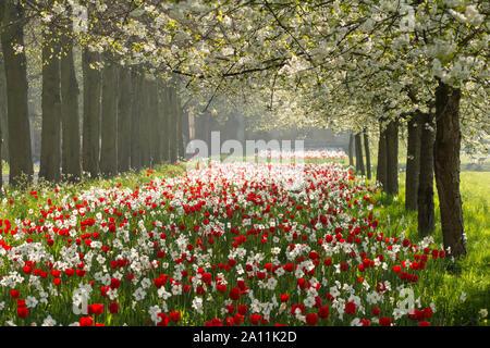 Spring time in Cambridge - Stock Photo