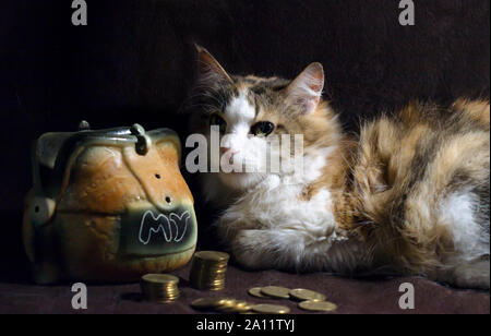 fluffy cat on a dark brown background sits next to the piggy bank and stacks of coins - Stock Photo
