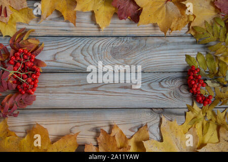 Dry maple leaves and berries of rowantree are lying on a wooden desk. Autumn still life. Copy space for your text. - Stock Photo