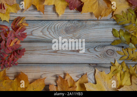 Dry maple leaves and branches of rowanberry are lying on a wooden desk. Autumn still life. Copy space for your text. - Stock Photo