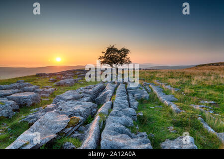 Beautiful sunset over a lone Hawthorn tree growing out of a limestone pavement at the Winskill Stones in the Yorkshire Dales