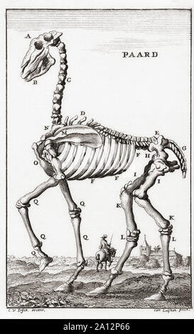 Skeleton of a horse, after a late 17th century engraving by Jan Luyken.