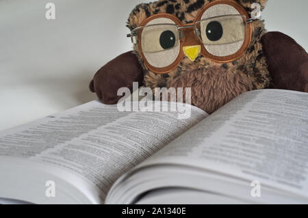 Toy Owl With Glasses on Reading a Dictionary 2