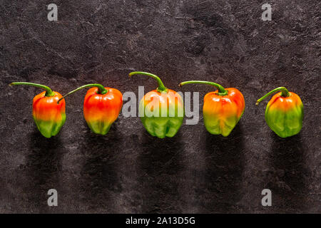 Five colorful habañero peppers viewed from top on a dark stone background - Stock Photo
