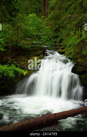 Whitehorse Falls, Umpqua National Forest, Rogue-Umpqua National Scenic Byway, Oregon - Stock Photo