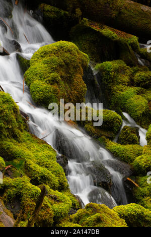 Clearwater Falls, Umpqua National Forest, Rogue-Umpqua National Scenic Byway, Oregon - Stock Photo