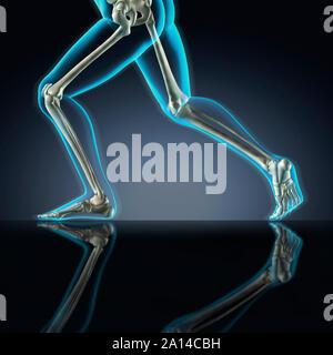 X-ray of skeletal leg bones in running position. - Stock Photo
