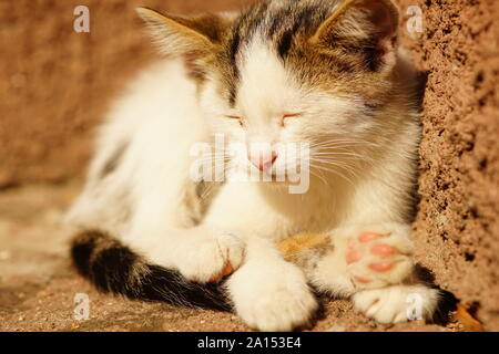 white kitten sleep on stone sunny steps outside the house - Stock Photo