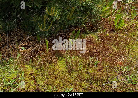 Germ of plants in Plana mountain Bulgaria - Stock Photo