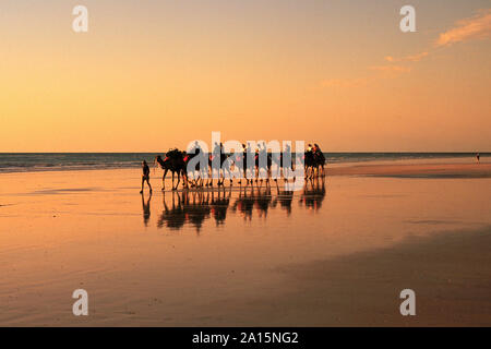 Australia, Western Australia, Kimberley Region, Broome, Tourist camel train on Cable Beach at sunset,    Photo © Fabio Mazzarella/Sintesi/Alamy Stock - Stock Photo