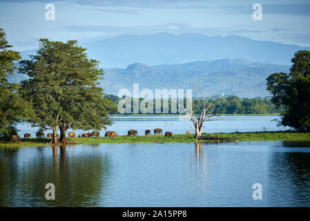 View to penisula at Udawalawe Reservoir with young elephants, Udawalawa National Park, Sri Lanka - Stock Photo