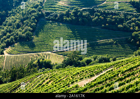 High angle view of green vineyards on hills in valley