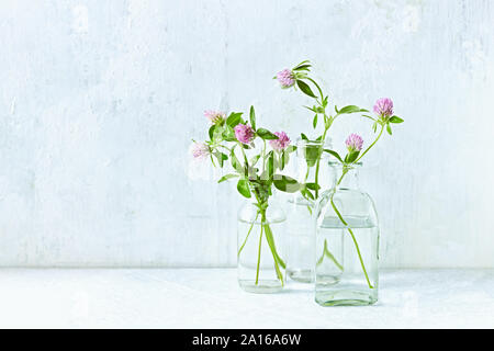 Red clover flowers in glass bottles. White background. Copy space - Stock Photo