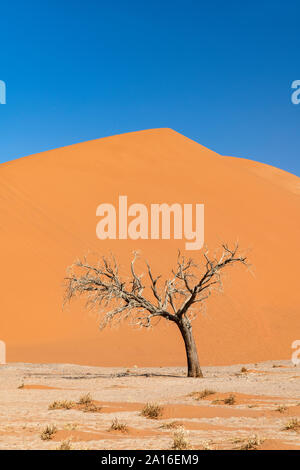 Dune 45, Sossusvlei, Namib-Naukluft National Park, Sesriem, Namibia - Stock Photo