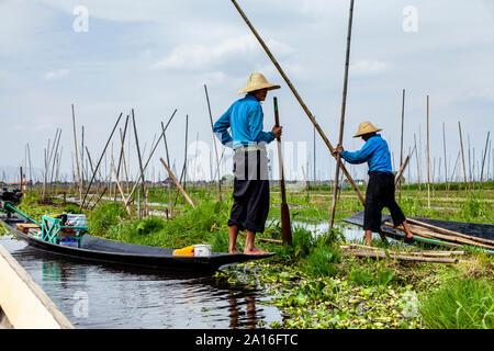 Floating Gardens, Lake Inle, Shan State, Myanmar - Stock Photo
