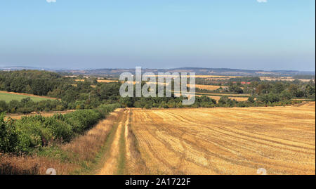 An English Rural Landscape in the Chiltern Hills with fields of golden wheat stubble - Stock Photo