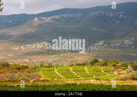 vineyards in the wine region Languedoc-Roussillon, Roussillon, France - Stock Photo