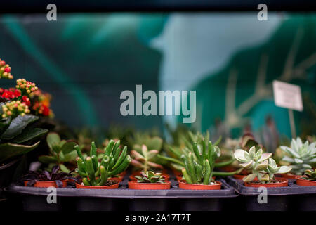 rows of tiny potted plants sit on a shelf in a garden store - Stock Photo