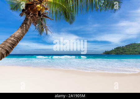 White sand beach with coco palms and tropical sea