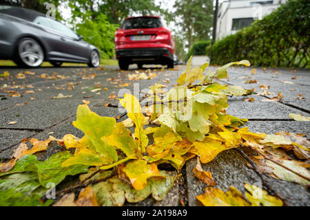 Nuremberg, Germany - September 23, 2019: Wet yellow autumn leaves are lying on the pavement with cars parking iand driving in front on a rainy autumn - Stock Photo