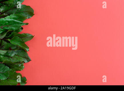 fresh beet leaves on a red background side view, culinary background - Stock Photo