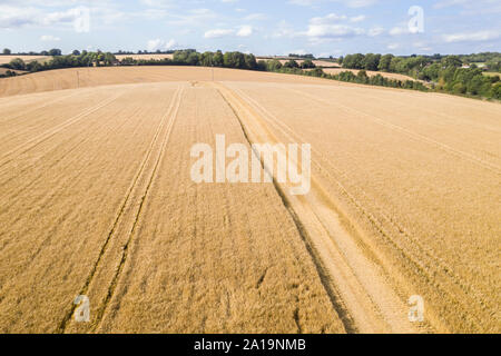 Aerial photo Harvest time - Stock Photo