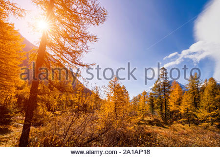Autumn landscape in the mountains with golden larches. Canada. - Stock Photo