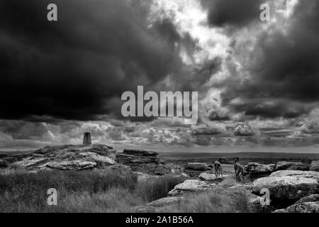 black and white image, Hawks Tor ordinance survey stone, heavy sky,  two dogs looking out over bodmin moor, - Stock Photo