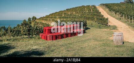 Vineyard on a hill in front of the sea. Fiornzuola di Focara, Pesaro-Urbino  province,  Marche, Italy. - Stock Photo
