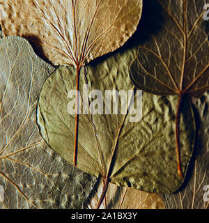 Pressed and dried leaves summer autumn flowers herbs background - Stock Photo