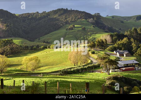 Patches of fresh green pastures and forest of farmland on hills of Mahurangi West near Auckland in New Zealand. - Stock Photo