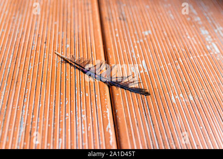 Closeup of one blue stellar jay bird feather on picnic table in North Campground in Bryce Canyon National Park - Stock Photo