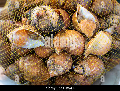 mesh bag of live snail shells in fish market - Stock Photo